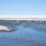 Bolivia part IV: Salar de Uyuni