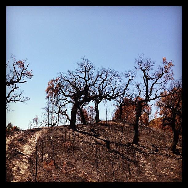Post wildfire view, by Rui Lúcio Carvalho