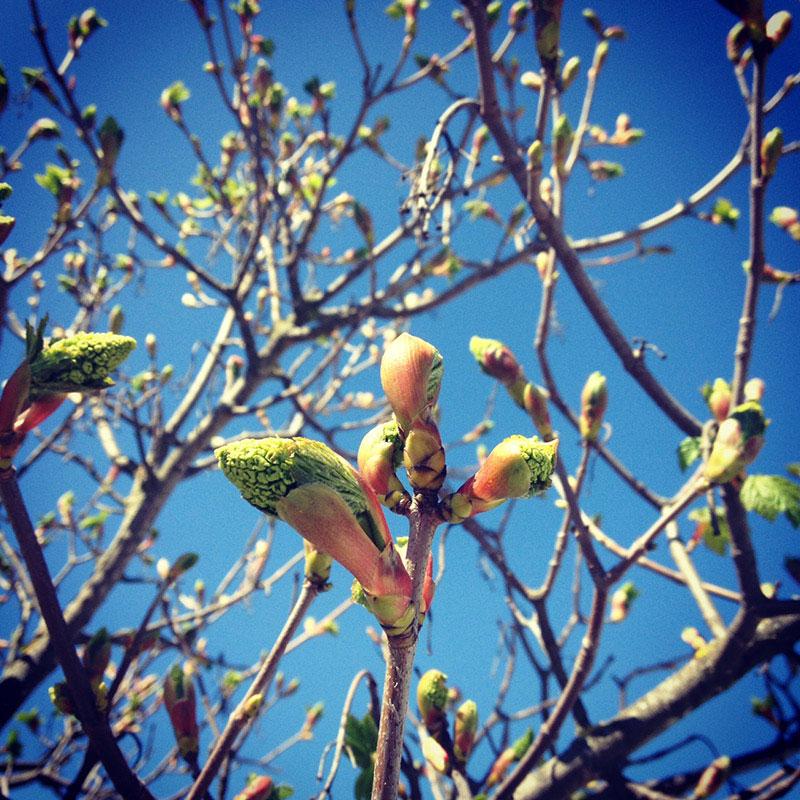 04_spring