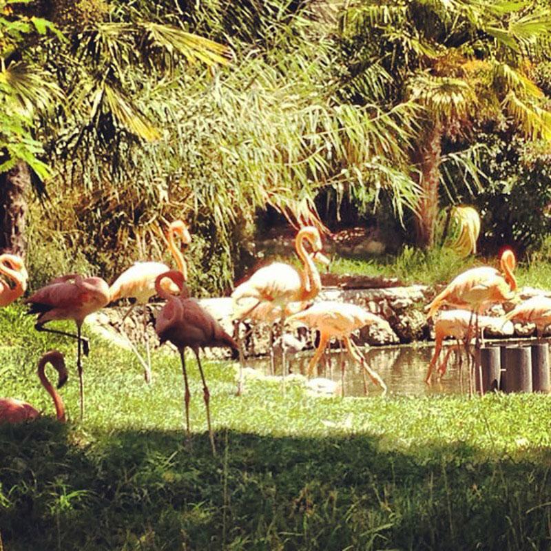 08_flamingoes