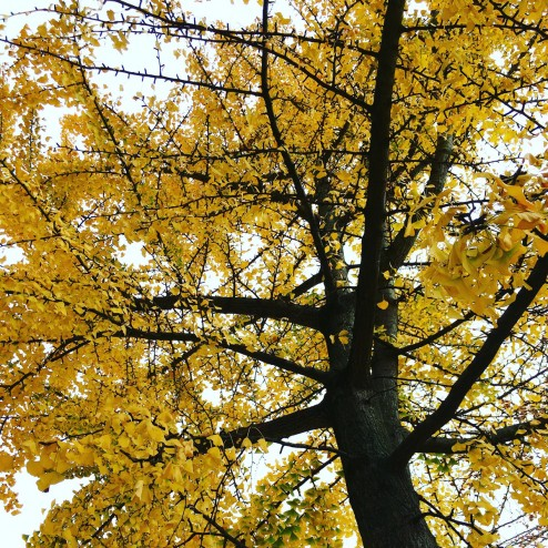 November 2015 - it's Fall and I love it
