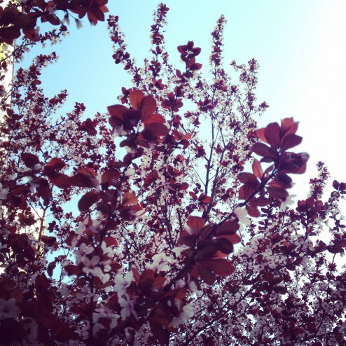 March 2015 - Spring!
